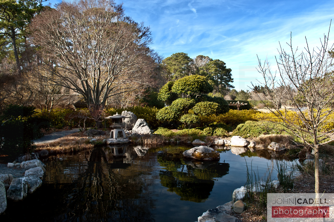 Bonsai Garden - Norfolk Botanical Gardens - © John Cadell Photography